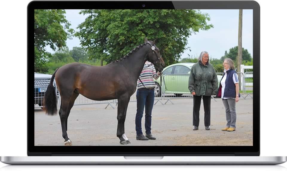 equine vet consultancy services